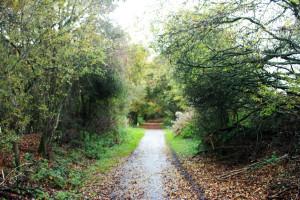cuckoo-trail
